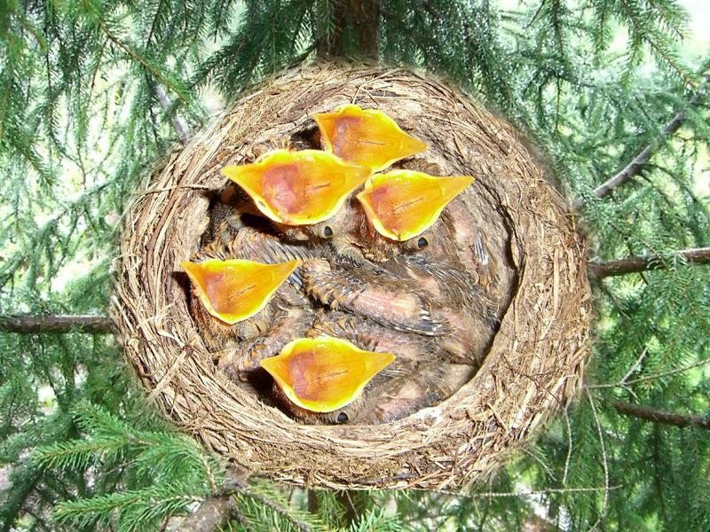 Valle brembana i nidi degli uccelli fauna selvatica - Primavera uccelli primavera colorazione pagine ...