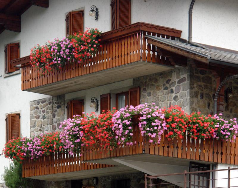 Balconi e davanzali fioriti i gerani hanno pochi rivali vita in