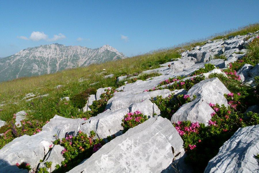 sentiero dei fiori bergamo italy - photo#17